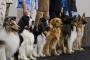 8 Errores comunes que los dueños cometen cuando entrenan a sus perros.