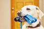 4 consejos para encontrar el mejor entrenador de perros