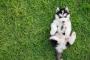 Hernias en cachorros: lo que necesita saber.