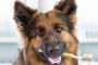 ¿Por qué debería preocuparse por la salud dental de su perro?