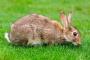 Flujo anormal de lágrimas debido a la obstrucción del conducto nasal en conejos