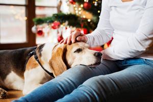 Cómo prevenir las mordeduras de perro durante la temporada de vacaciones estresantes