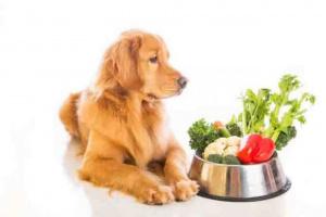 5 mejores suplementos para tu perro.
