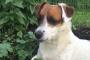 Los perros y las condiciones de piel comunes