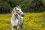 Cólico en caballos - todo lo que necesitas saber