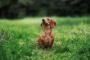 Ritmo cardíaco anormal en los perros