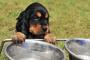 7 cosas que tu mascota necesita este verano