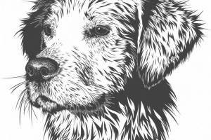 El veterinario salva al perro mayor de un tumor cerebral (¡dos veces!)