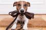 Obtenga consejos sobre cómo entrenar perros en los modales de puerta