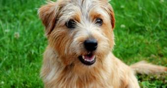 Granulomatosis linfomatoide en perros