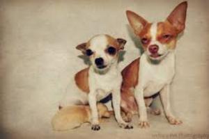 Intoxicación con hongos en perros