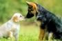 Mascotas y veneno: Ayuda es una llamada telefónica de distancia