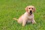 6 Razones por las que limpiar con vinagre es bueno para su perro y su hogar