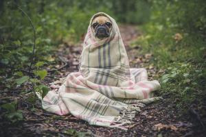 Un cachorro con una alergia al aguijón