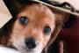Conozca la diferencia entre el vertimiento estacional de perros