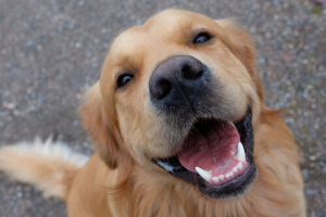 Cuidando la salud dental de tu mascota