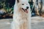 Carcinoma nasal de células escamosas en perros