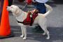 Las diferencias entre perros de servicio y perros de terapia