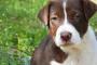 Pfizer consigue un jonrón con la nueva droga para el cáncer canino