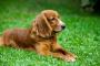 ¿Perros pedorros? Una respuesta seria a una pregunta vergonzosa