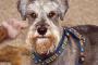 25 hechos interesantes sobre perros