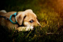 Lo que realmente significa cuando tu perro come caca