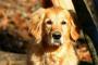 Inflamación corneal (queratitis no ulcerosa) en perros