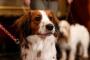 Tumor cardíaco (rabdomioma) en perros