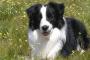 Dieta para perros con cristales de estruvita