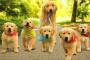 Cáncer de corazón (hemangiosarcoma) en perros