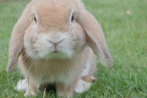 Comprando tu primer conejo