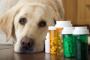 Artritis del perro? Glucosamina para perros