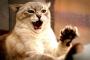 Razones por las que tu gato te aruña