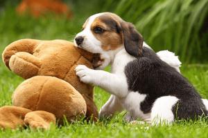 Cómo entrenar a un perro para cazar