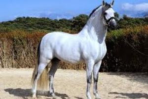 Enfermedades musculares y esqueléticas en caballos