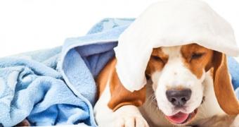 Cómo saber si la tos de su perro es algo de lo que preocuparse