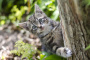 Linfadenitis en gatos