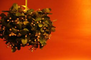 Peligrosas plantas de vacaciones de invierno para mascotas