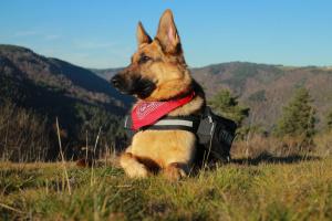 Las 10 mejores razas de perro guardián