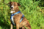 10 peligros ocultos del clima cálido para perros