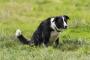 Desplazamiento posterior de la vejiga en los perros