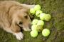 Cómo enseñar a su perro a buscar