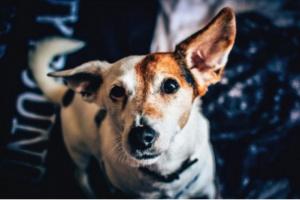 ¿Qué suplementos debo darle a mi perro?