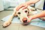 Convulsiones de perro: ¿qué las causa y cómo deben ser tratadas?