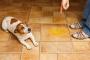 5 razones por las cuales tu perro orina en la casa