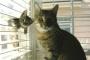 Estreñimiento (severo) en gatos