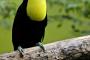 Signos de enfermedad en aves domésticas