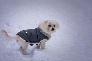 ¿Debería mi perro usar un abrigo en invierno?