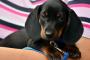 Neuropatía canina (los conceptos básicos detrás de este desorden nervioso)
