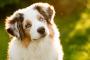 Envenenamiento por medicina cardíaca en perros